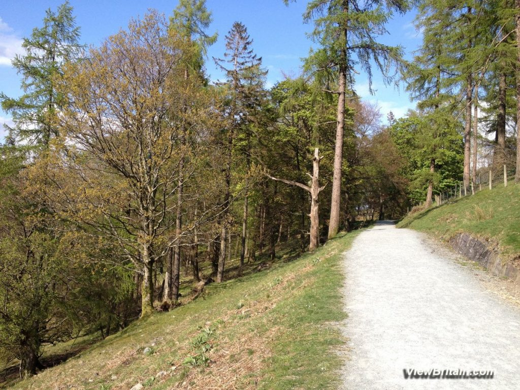 Linear-straight path-along-the-east-side-of-Tarn-Hows-lake