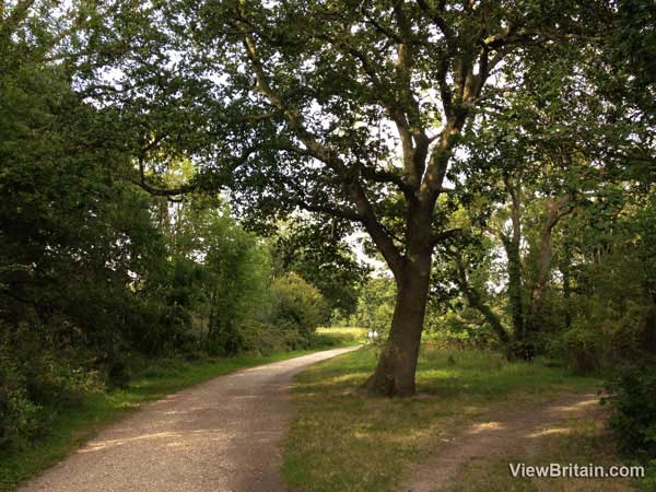 two-paths-at-dinton-pastures-country-park
